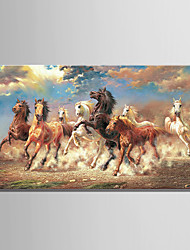 Large Size 8 Running Horse Animal Oil painting on Canvas 3D Print Picture One Panel Whit frame Ready to Hang