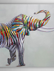 Hand Painted Oil Painting Animal Colorful Elephant with Stretched Frame