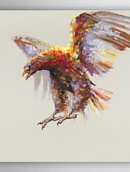mão pintura a óleo pintado águia animais de vôo, com quadro esticado