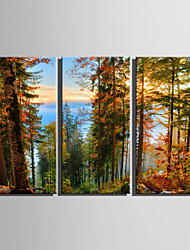 E-HOME® Stretched Canvas Art Forest Scenery Decoration Painting  Set Of 3