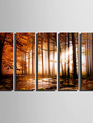 E-HOME Stretched Canvas Art Quiet Woods Decoration Painting Set Of 5