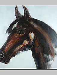 Large Hand Painted Horse Animal Oil Painting On Canvas Modern Wall Art Picture For Living Room Home Decoration Ready To Hang