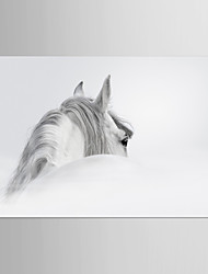 Canvas Set Animal Fantasy Classic Traditional,One Panel Canvas Horizontal Print Wall Decor For Home Decoration