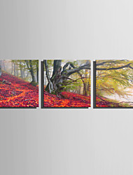 E-HOME Stretched Canvas Art Autumn Woods Wonders Decoration Painting Set Of 3
