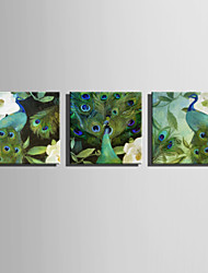 E-HOME Stretched Canvas Art Green Peacock Decoration Painting One Pcs