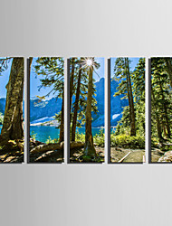 E-HOME Stretched Canvas Art Summer Woods Decoration Painting Set Of 5