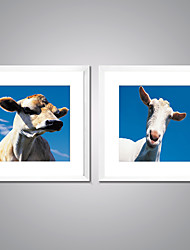 Canvas Prints A Cow and  A Sheep  Picture Print on Canvas Animal Canvas Art with White Frame  for Wall Decoration