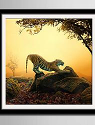 E-HOME® Framed Canvas Art Lazy Tiger On Stone Framed Canvas Print One Pcs