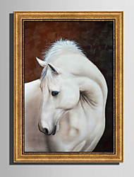 E-HOME® Framed Canvas Art A White Horse Framed Canvas Print One Pcs