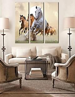 strakt lærred kunst kører hest sæt med 3