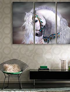 e-FOYER toile tendue es le cheval blanc peinture décoration ensemble de trois