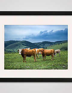 Some Cows on the Grass Landscape Canvas Art with Black Frame 16x20inch for Wall Decoration Ready To Hang