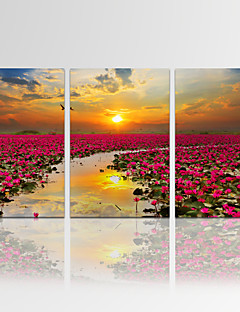 VISUAL STAR®Framed Sunrise Wall Art for Home Decor Flower Giclee Print on Canvas Ready to Hang