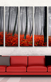 Canvas Set of 5 Landscape Rose Forest in Sunset Stretched Canvas Print Ready to Hang