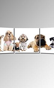 걸 준비 아이 동물 벽 예술에 대한 시각 star®cute의 곡 캔버스 인쇄