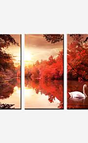 Landskap / Botanisk / Fotografisk / Realism / Romantik Canvastryck Tre paneler Redo att hänga , Vertikal