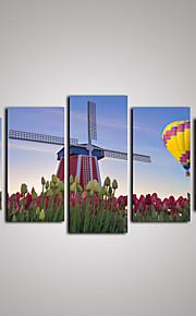 Leisure / Landscape / Kasvitiede / Valokuvaus / Realismi / Matkailu Canvas Tulosta 5 paneeli Valmis Hang , Horizontal