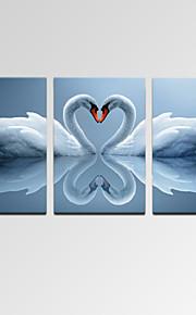 VISUAL STAR®Modern Swan Love Canvas Print Wall Art for Home Decor Ready to Hang