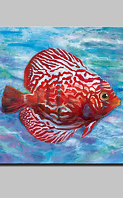 Lager Handmade Modern Glofish Oil Painting On Canvas For Living Room Home Decor Wall Paintings Whit Frame Ready To Hang