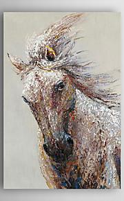 håndmalte oljemaleri dyr kjører hest med strukket ramme 7 veggen arts®