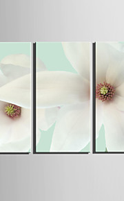 E-HOME® Stretched Canvas Art White Flowers Decoration Painting  Set Of 3