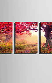 E-HOME® Stretched Canvas Art A Tree With Red Leaves Decoration Painting  Set Of 3