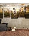 Toiles art animal Un Pentium Cheval Ensemble de 5
