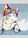 Pictat manual Animal Pătrat,Modern Clasic Un Panou Canava Hang-pictate pictură în ulei For Pagina de decorare