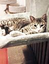 Pisici Paturi Animale de Companie  Rogojini & Pernuțe Mată Keep Warm Lavabil Casul/Zilnic Gri Galben