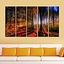 Ispruži platnu print Umjetnost Pejzaž Woods u sunca Set od 5